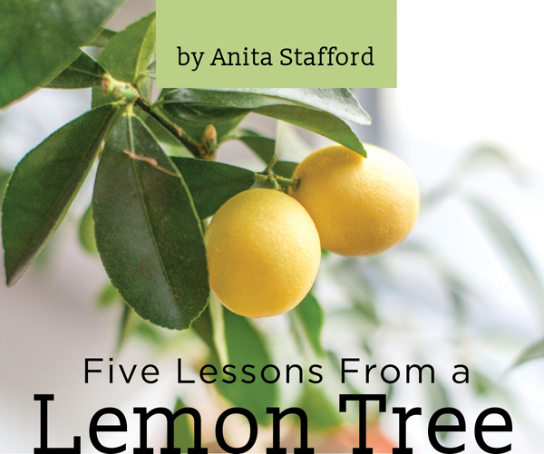 Stafford_LemonTree